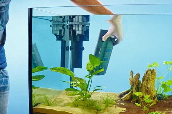 Как установить фильтр в аквариум, чтобы он хорошо работал, не оставлял застойных зон. Виды фильтрующих систем, принцип действия.