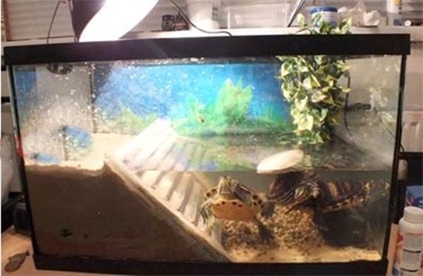 Фильтр для красноухой черепахи