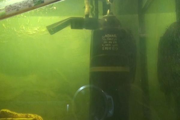 Фильтр в аквариуме как почистить