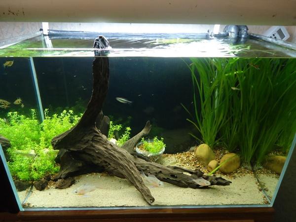 фильтр для аквариума 80 литров