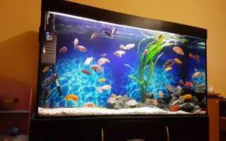 Принцип работы и особенности выбора фильтра для аквариума