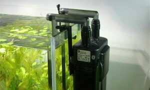 Пошаговая инструкция, как правильно установить фильтр в аквариум
